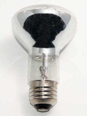 100R20FL-12V Incandescent FLood Lamp